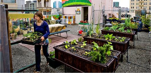 7 Motivos para crear tu huerto urbano