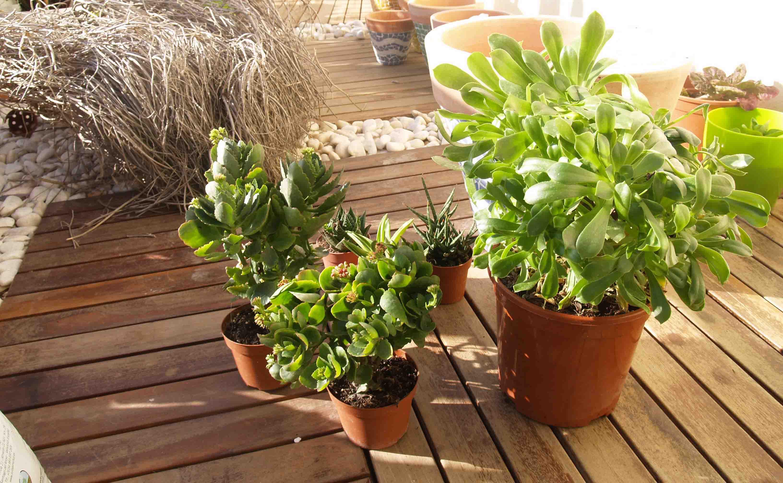 Diseño de jardín: Cómo hacer una composición vegetal