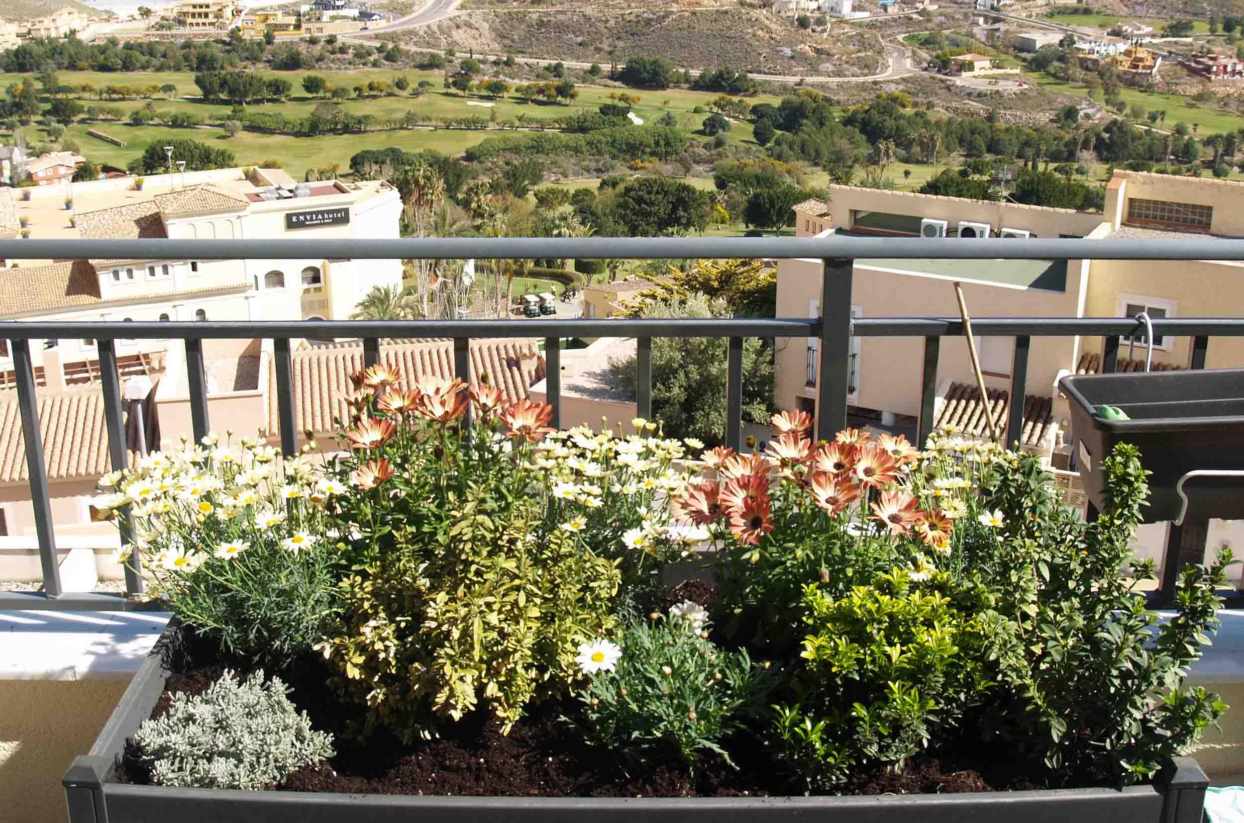 jardin margaritas
