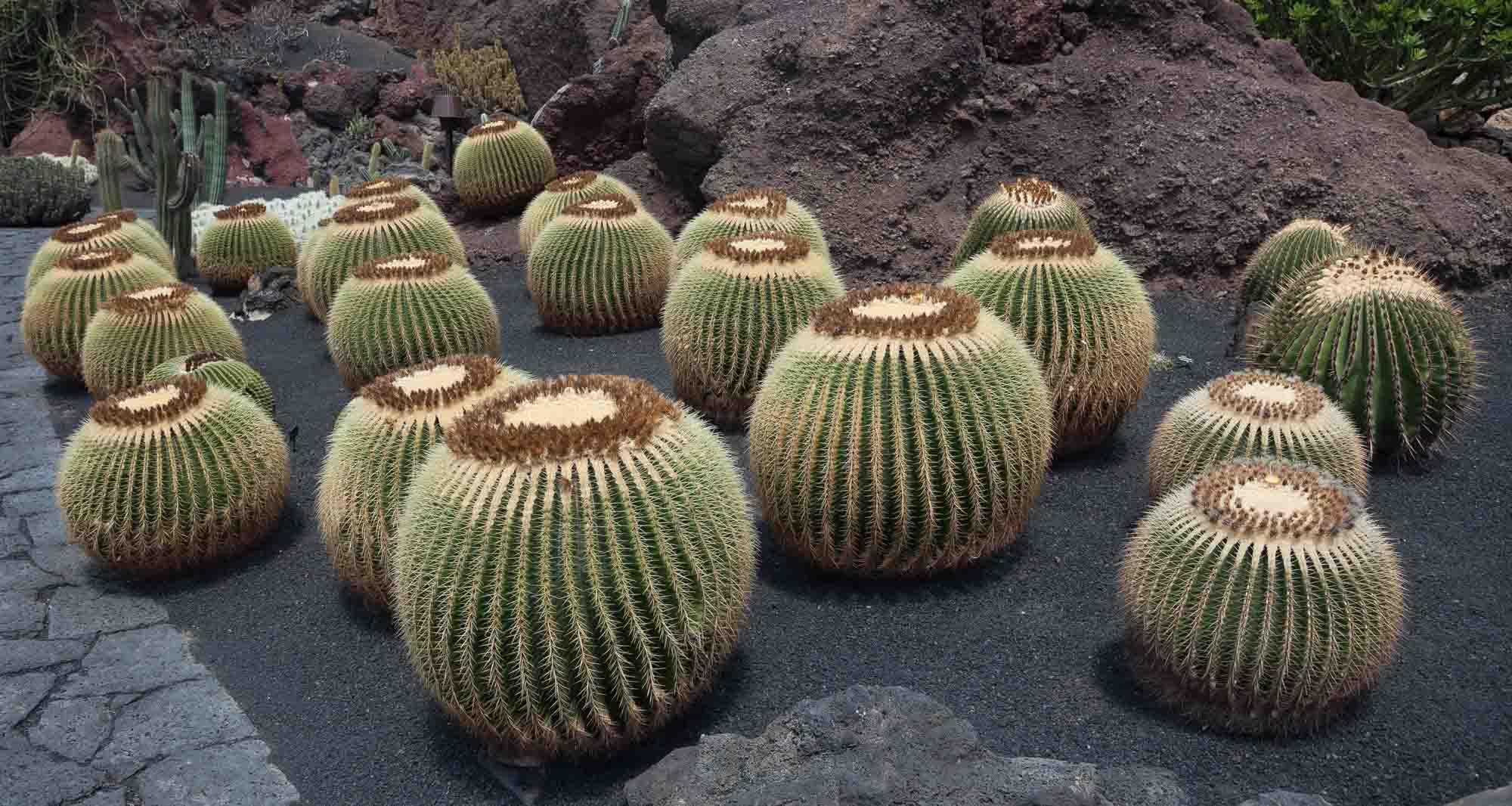 Paisajismo con cactus - Xerojardinería