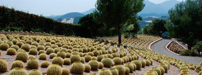 Paisajismo con cactus – Xerojardinería