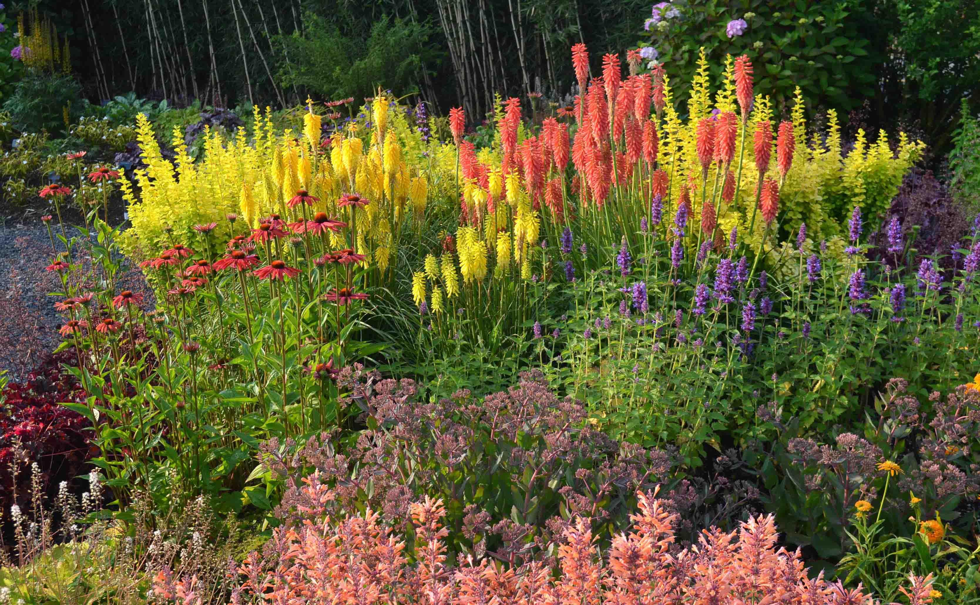 Jardineria y plantas: Kniphofia, Exotismo en tu Jardín