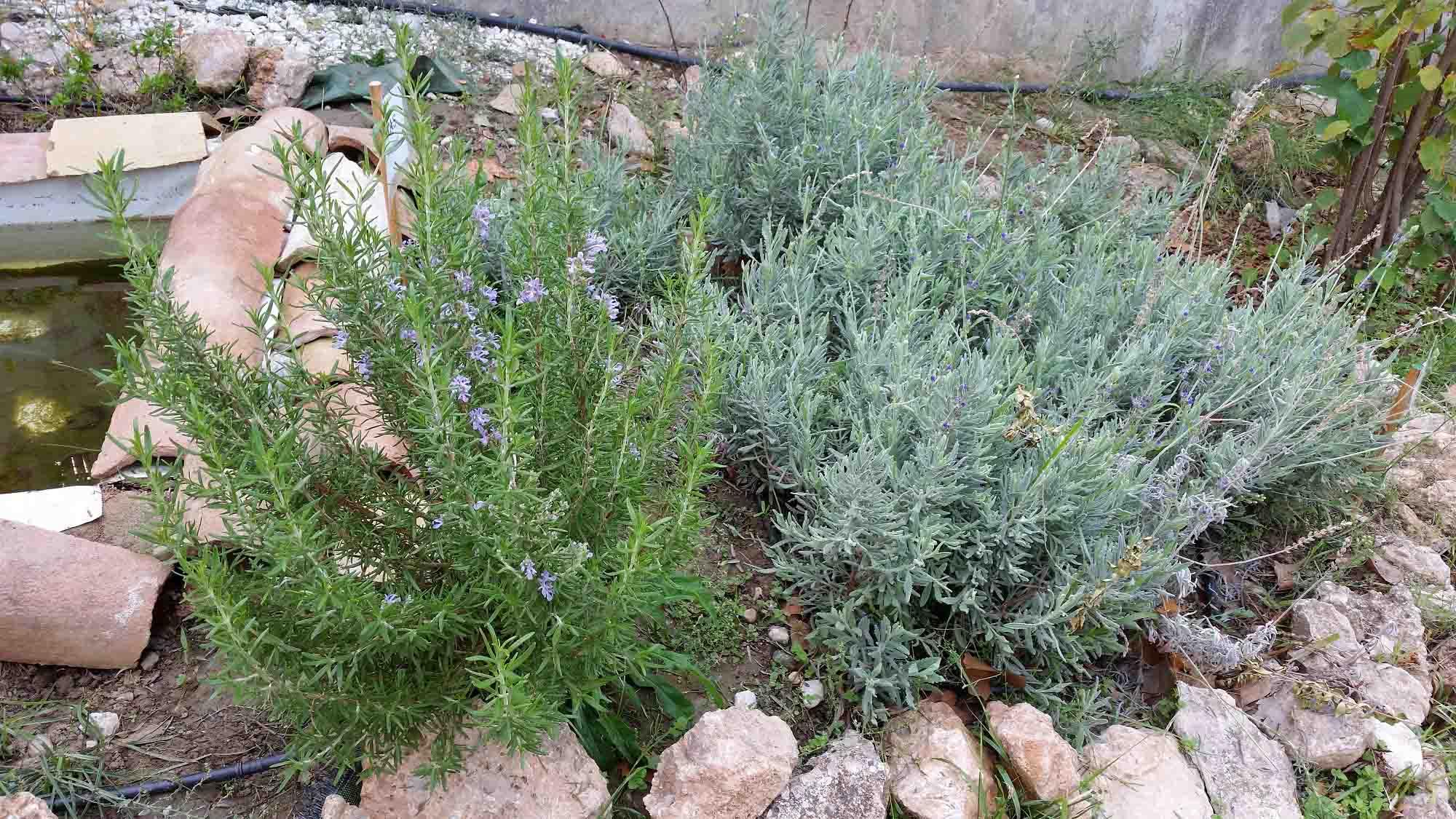 Prepara tu jard n para la primavera paissano for Jardines de lavanda