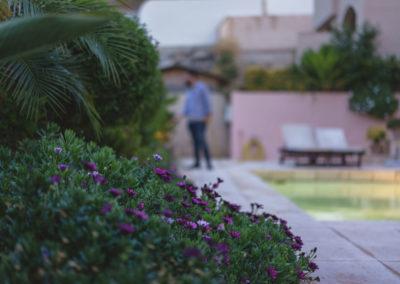 Diseño de jardines y piscinas Almería Paisajista