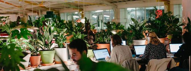 Beneficios de tener un jard n en la oficina paissano for Jardines pequenos para oficina