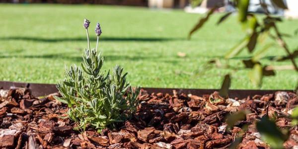 Productos de Jardinería imprescindibles para tu jardín